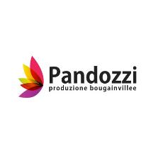 PANDOZZI