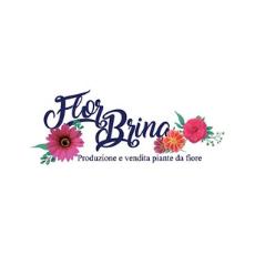FLOR BRINA