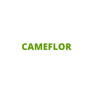 CAMEFLOR