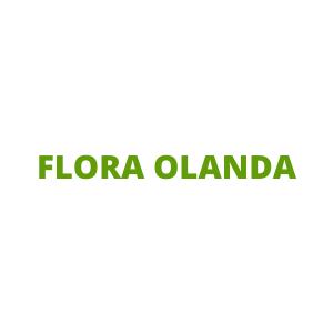 FLORA OLANDA